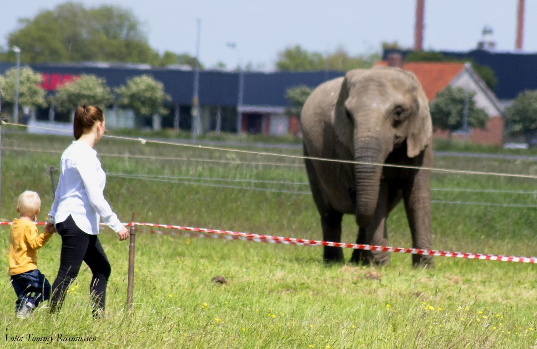 elefanter 2